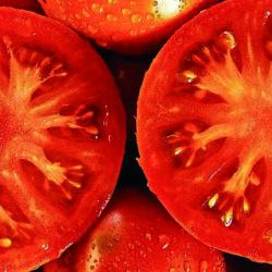 Tomateari buruzko topikoak