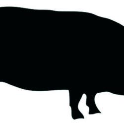 Con la festividad de San Martín comienza la época de la matanza del cerdo