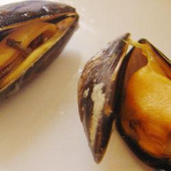 El mejillón, un marisco nutritivo, delicioso y asequible