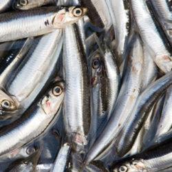 XV Día de la anchoa - Antxoa egune