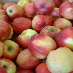 La manzana, fruta de otoño