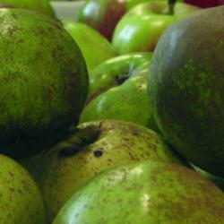 La manzana, la fruta del País Vasco