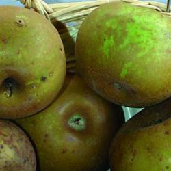 Manzanas de Errezil, fruta tradicional de los caseríos