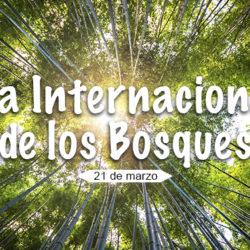 """Día Internacional de los Bosques: """"¡Aprende a amar el bosque!"""""""