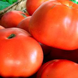 Tomate rosado de Aretxabaleta