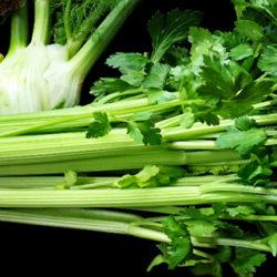 El apio, una hortaliza con grandes beneficios para la salud